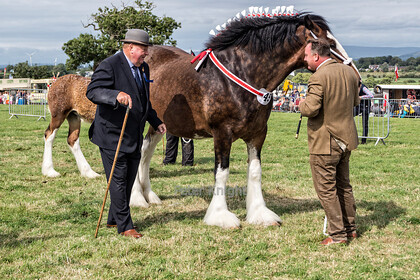 Great-Eccleston-Show-121 