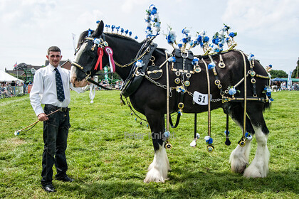 GE Show 2014 Best Dressed Horse 