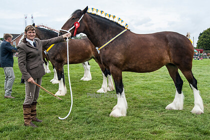 GE Show 2014 Fellthorpe Esther Jane 