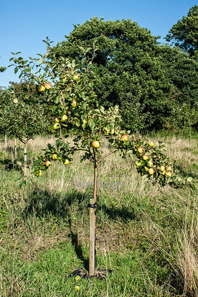 Elswick Community Orchard 