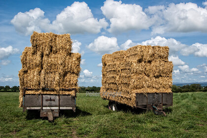 Hay Waggon 