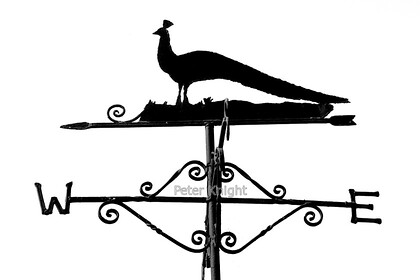 Weather Vane B&W 